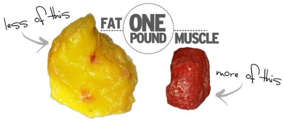 how_it_works_muscle_fat1-580x250